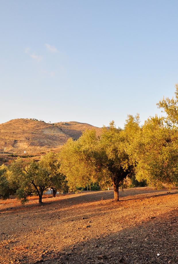 Malaga Andalusien